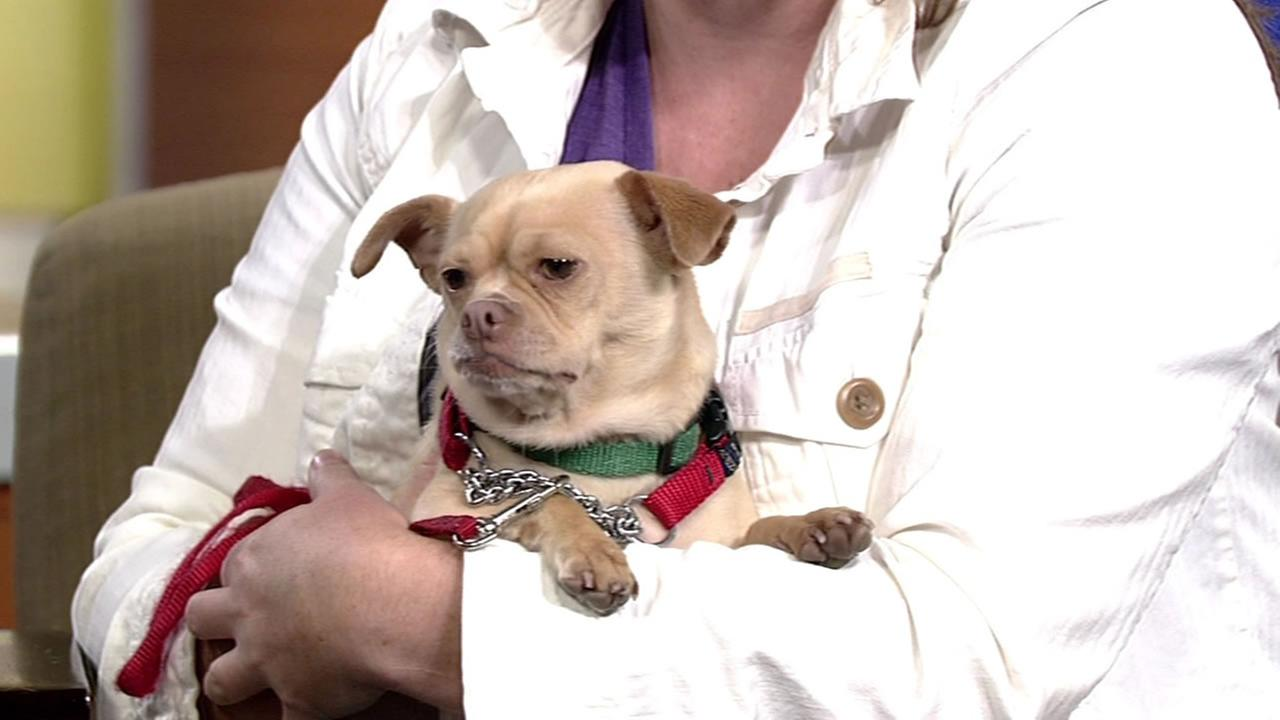 Check out Sandy, this weeks Perfect Pet available at the Marin Humane Society.