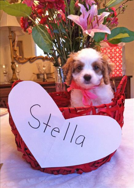 """<div class=""""meta image-caption""""><div class=""""origin-logo origin-image kgo""""><span>KGO</span></div><span class=""""caption-text"""">Meet Stella from San Jose! ABC7 News viewers and staff are sending in photos of their dogs in honor of National Puppy Day on March 23, 2015. (Photo submitted by Ashly Jacobs/uReport)</span></div>"""