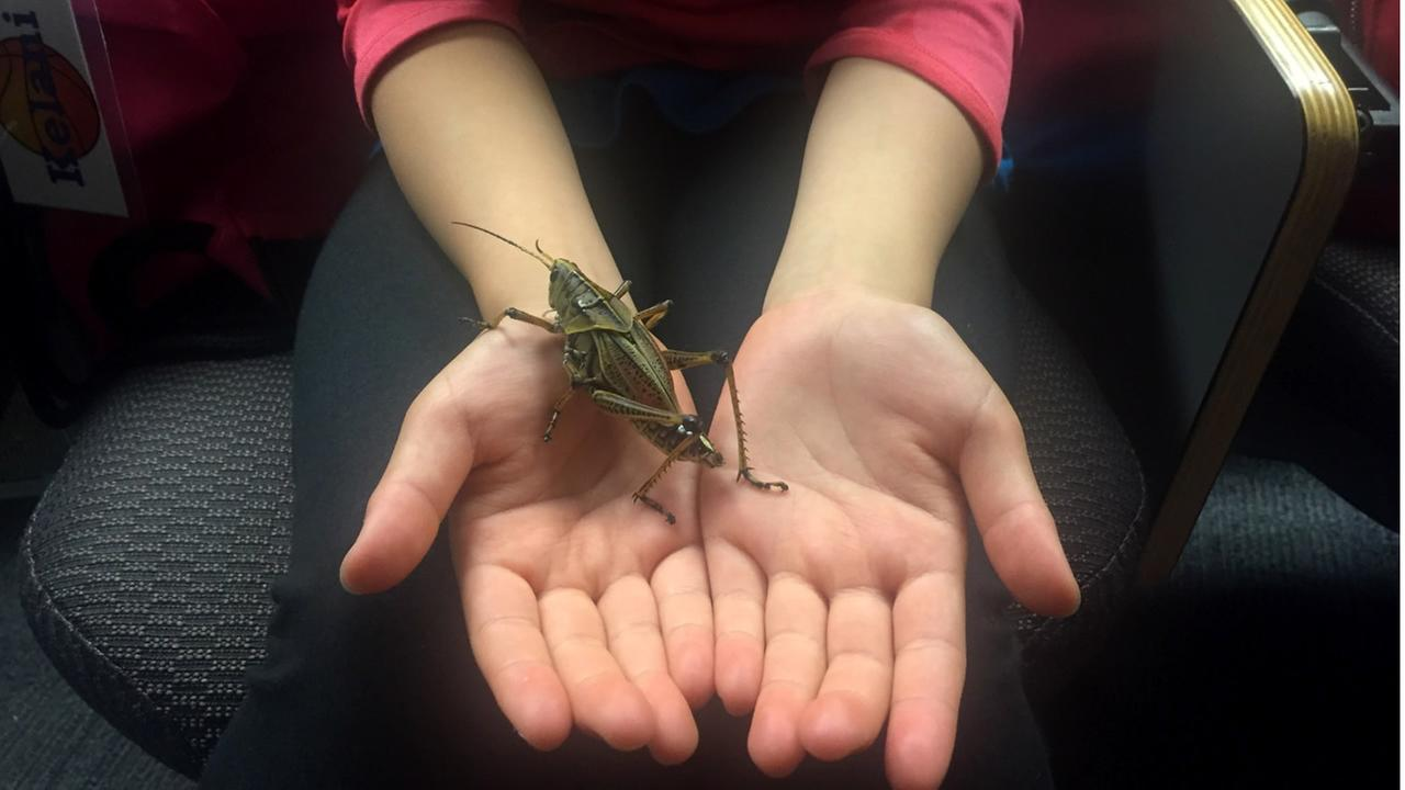 A girl holds out a grasshopper in San Francisco, Calif. on June 20, 2017.