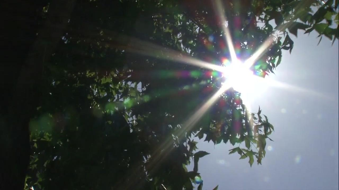 Sun shines through the trees on a hot day in San Jose, Calif. Thursday, June 22, 2017.