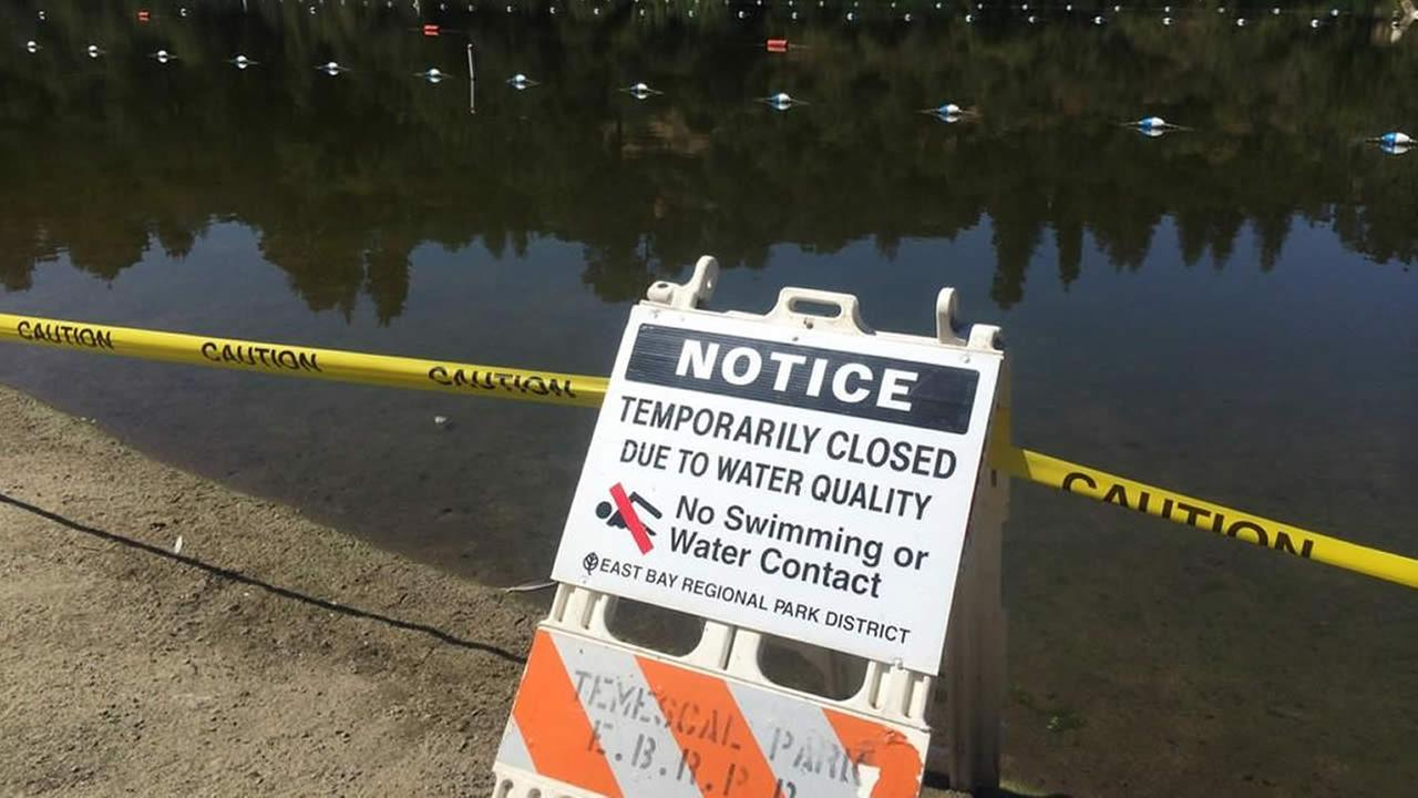 Rare toxic algae bloom prompts officials to close Oaklands Lake Temescal.