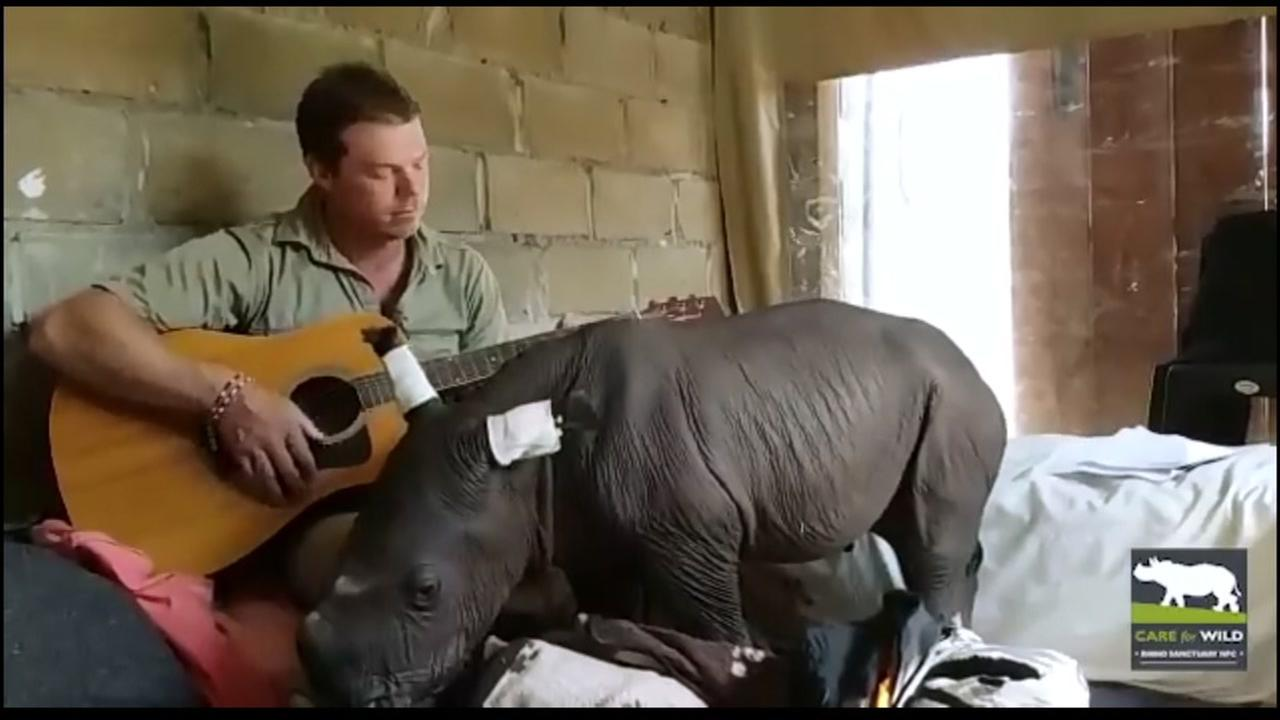 A caretaker serenades a baby rhino at The Care for Wild Rhino Sanctuary in Sonpark, South Africa.