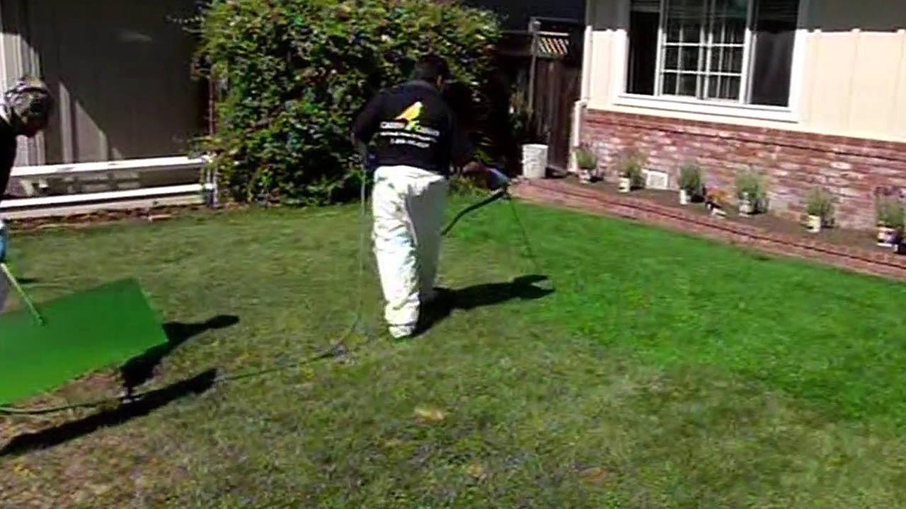 Company paints a brown lawn green