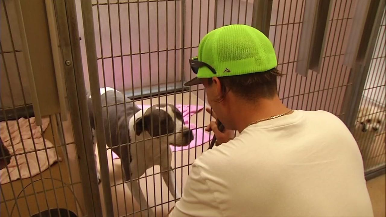 Anthony and Dev the pit bull reunite at Contra Costa Animal Services in Martinez, Calif. on Wednesday, July 5, 2017.