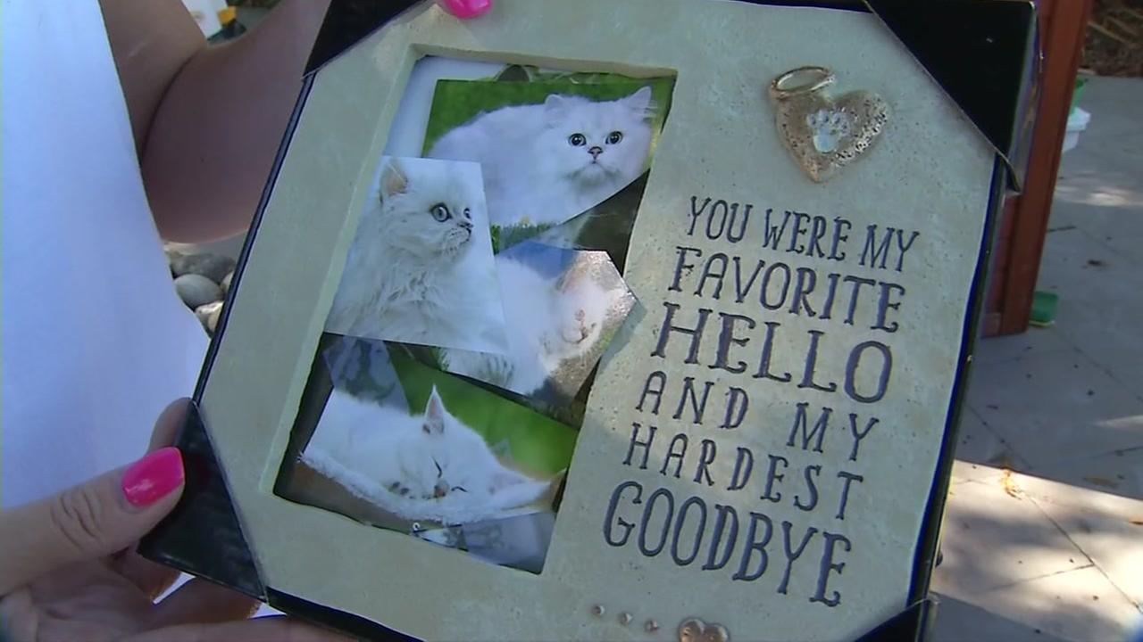 Snowball the cat is seen in these photos on Monday, July 24, 2017.