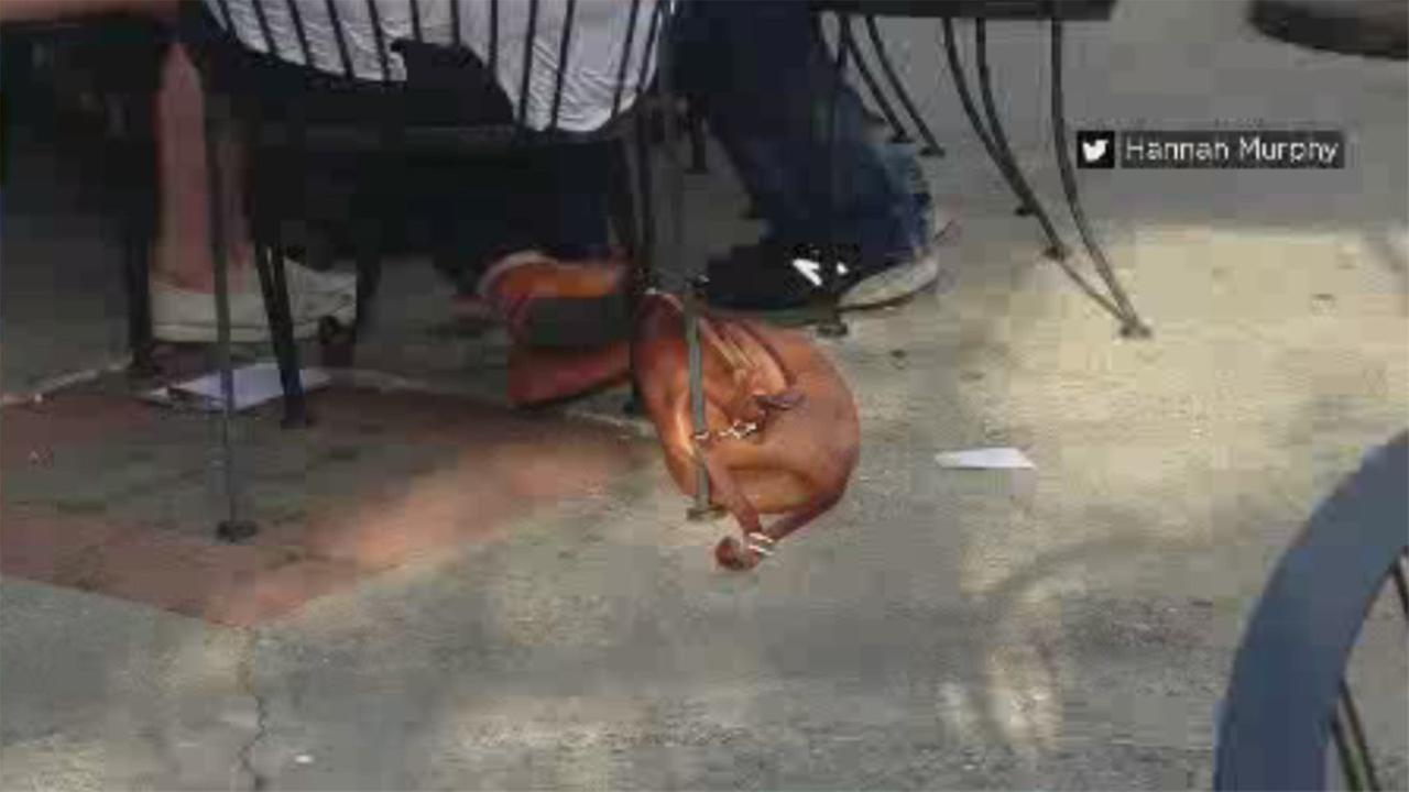 FILE -- Purse resembles dog at restaurant in New York.