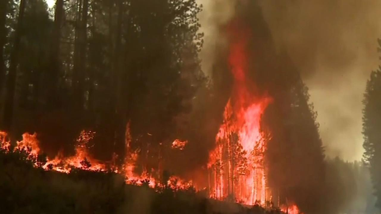 tree on fire in California wildfire