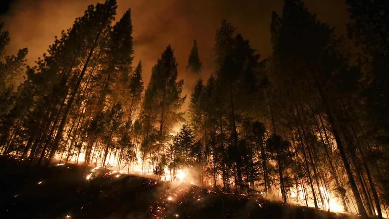 Fire crews in Yosemite are working to save the same giant sequoia trees that were endangered by the Rim Fire in August 2013.