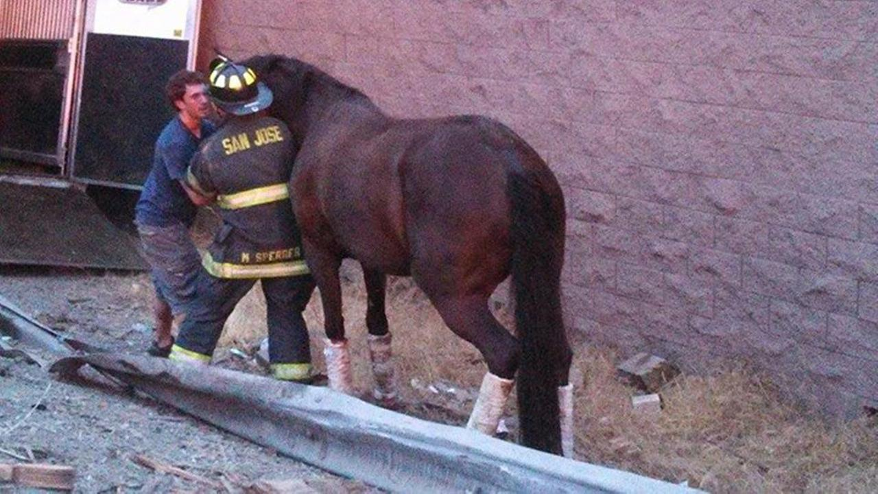 San Jose firefighter rescues horse after accident on Hwy 85 (Courtesy of Friends of San Jose Firefighters)