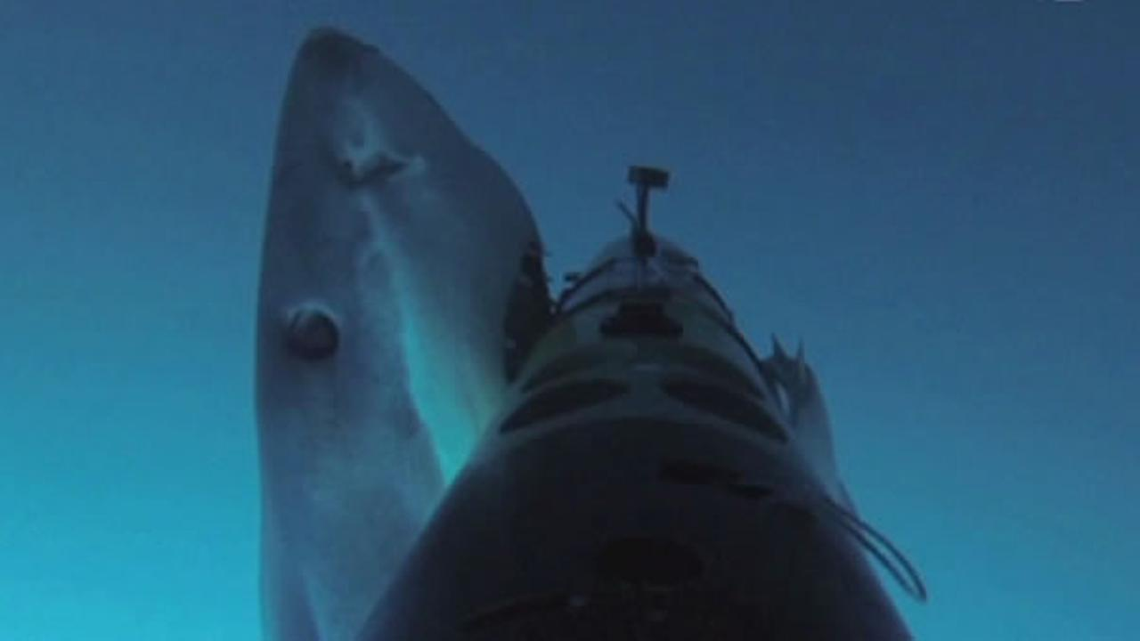 The Discovery Channel released some remarkable, never-before-seen video of a shark attack.
