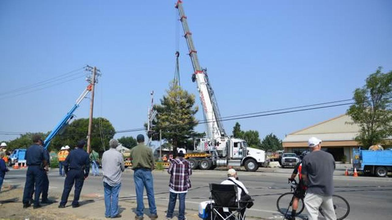 Many stood by to watch the transplant of the 50-foot, 45 ton albino redwood.Wayne Freedman/ABC7 News