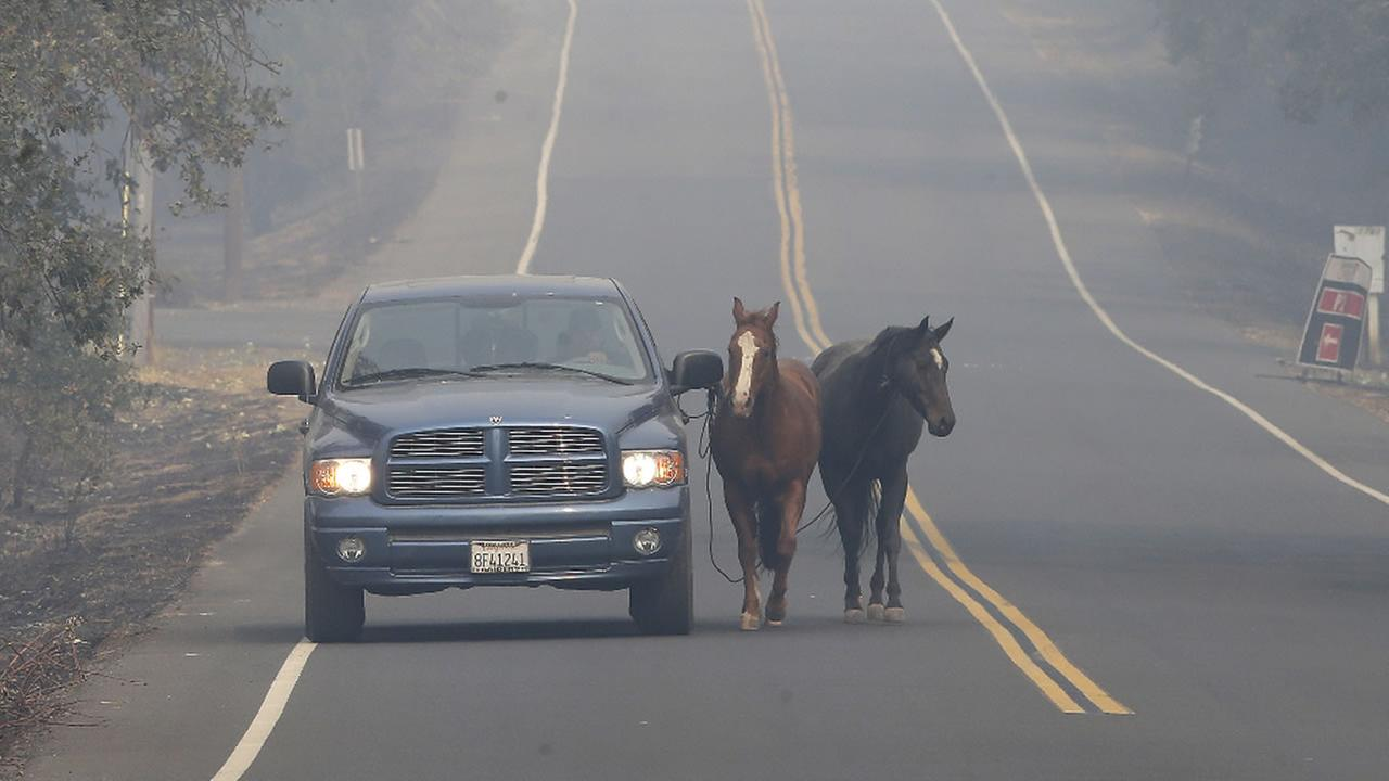 Pepe Tamaya leads horses Sammy, center, and Loli to safety from a deadly wildfire Tuesday, Oct. 10, 2017, in Napa, Calif.