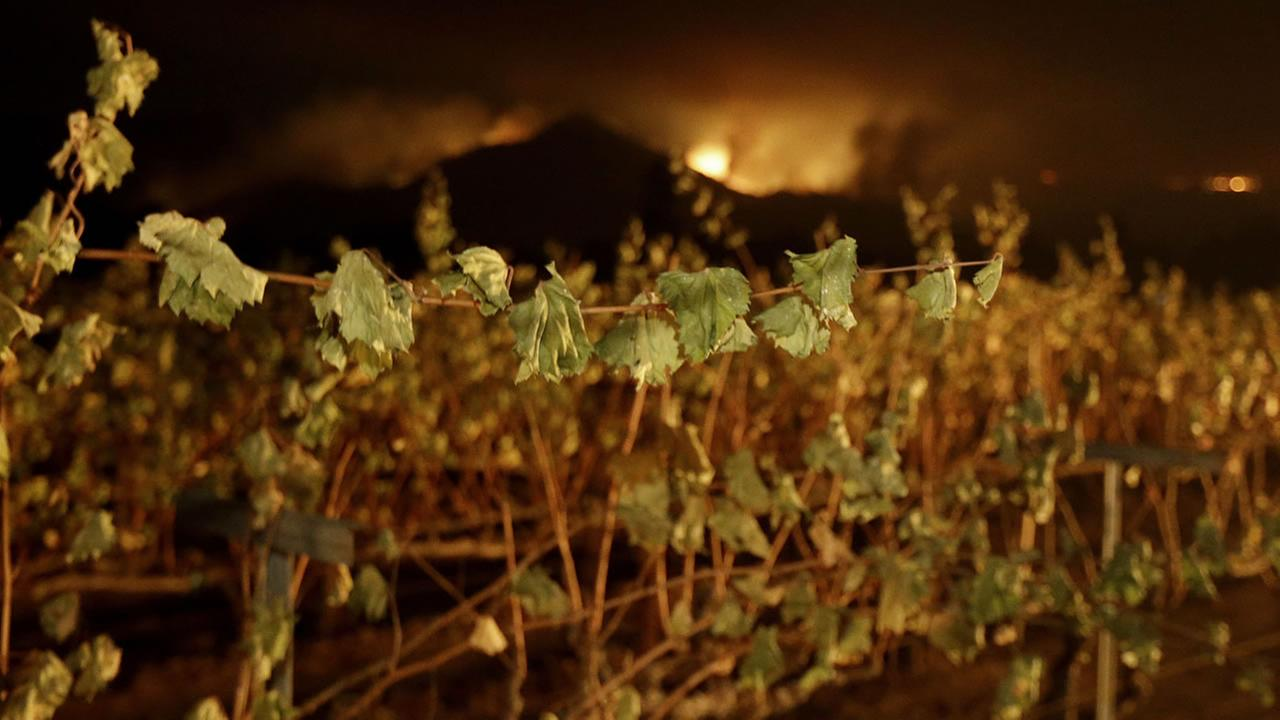 Charred grapes appear in the foreground as fires rage in the background of this image from the North Bay fires on Tuesday, Oct. 10, 2017.
