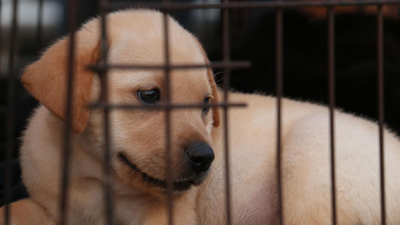 A puppy sits in a cage in this undated file photo.