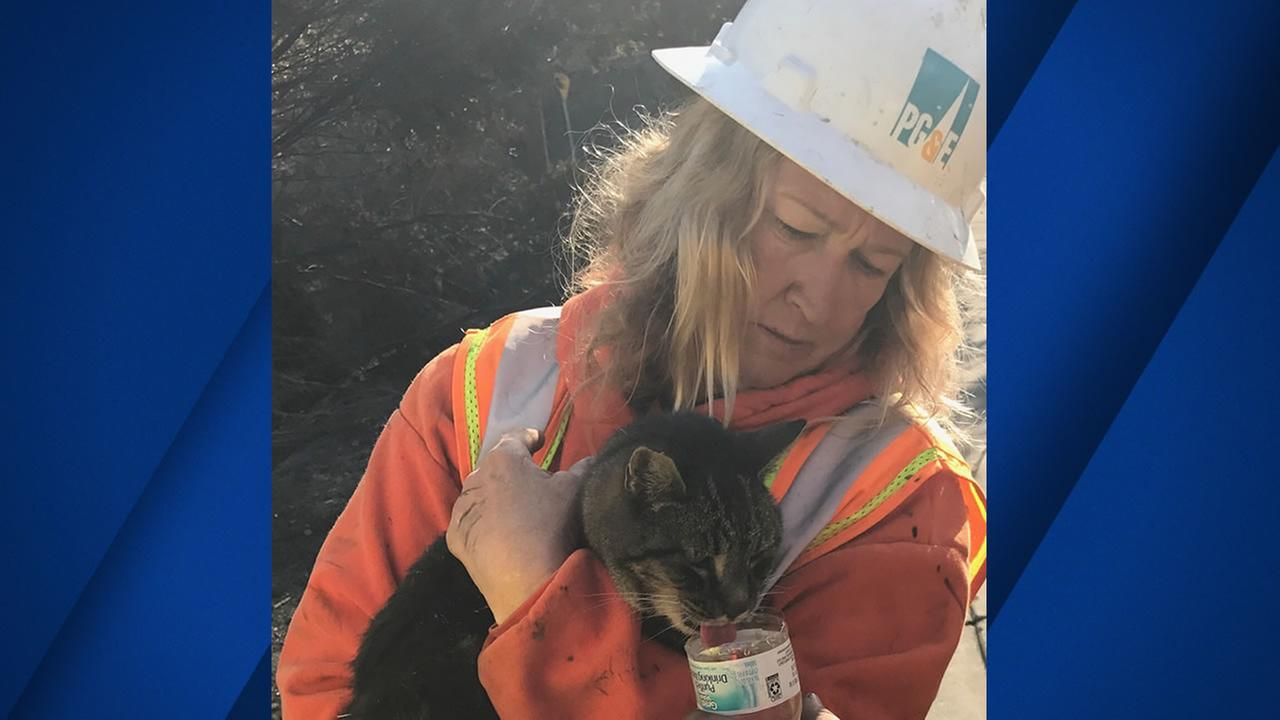 A PG&E worker gives a cat water after finding it on Rincon Ridge Drive in Santa Rosa, Calif.