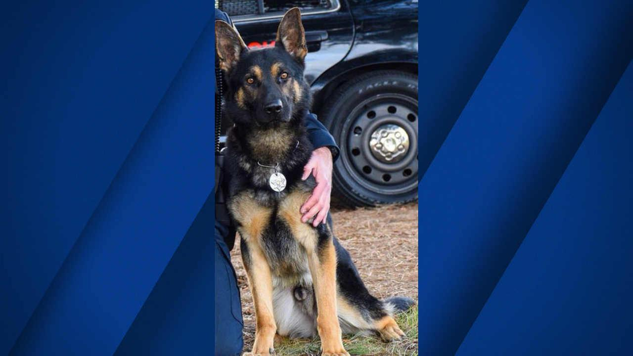 K9 officer Jax is seen in this undated image.
