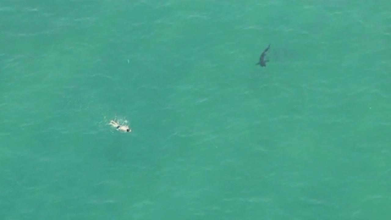 A great white shark off the coast of Manhattan Beach.