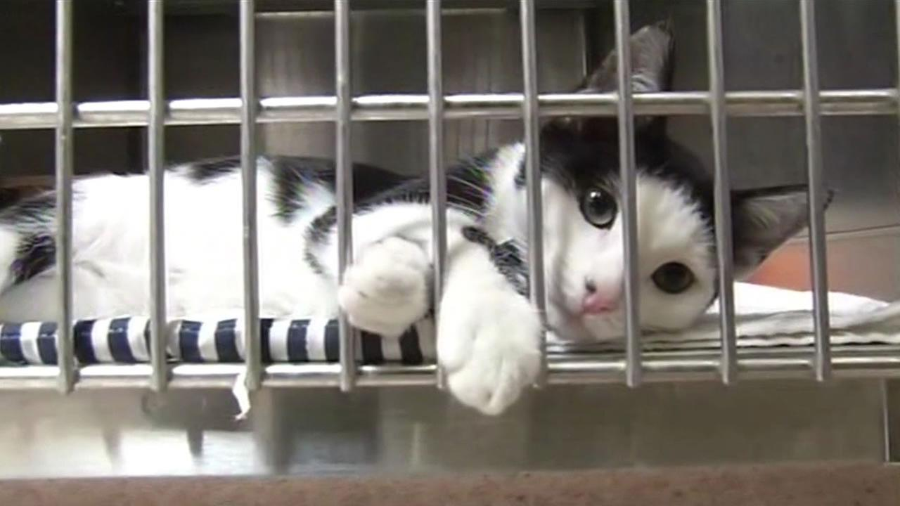 The first of the abandoned cats and kittens left outside the Marin Humane Society in Novato last week are now up for adoption.
