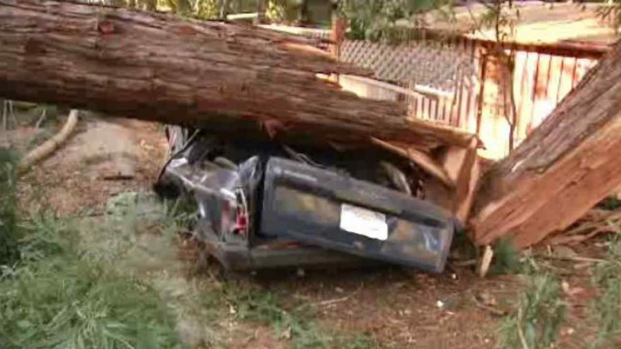 A car is seen after being crushed by a tree in Redwood City, Calif. on Saturday, December 16, 2017.