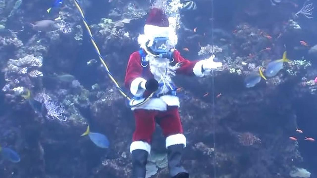 Scuba Santa dives into the California Academy of Sciences Coral Reef tank in San Francisco on Tuesday, Dec. 19, 2017.