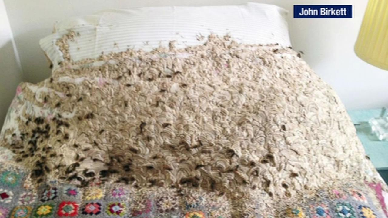 More than 5,000 wasps took over a bedroom and ate through the bedding, mattress and pillows in the United Kingdom.