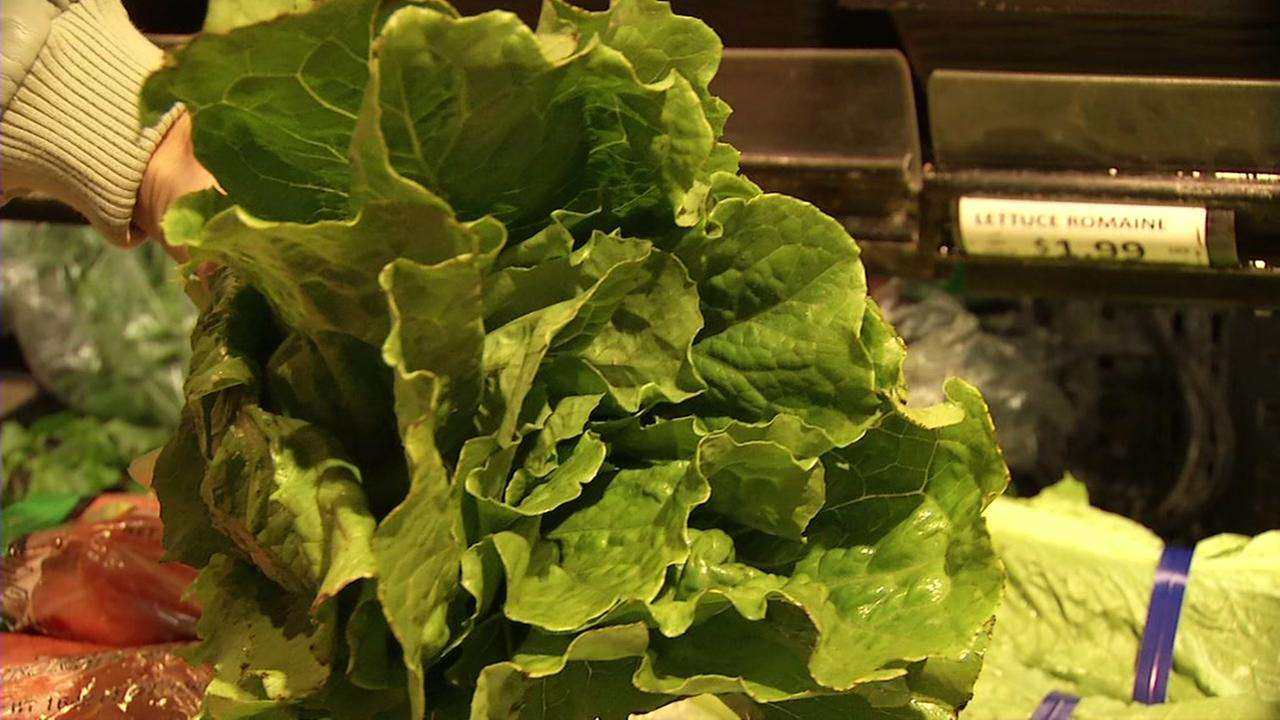 This is an undated image of romaine lettuce.