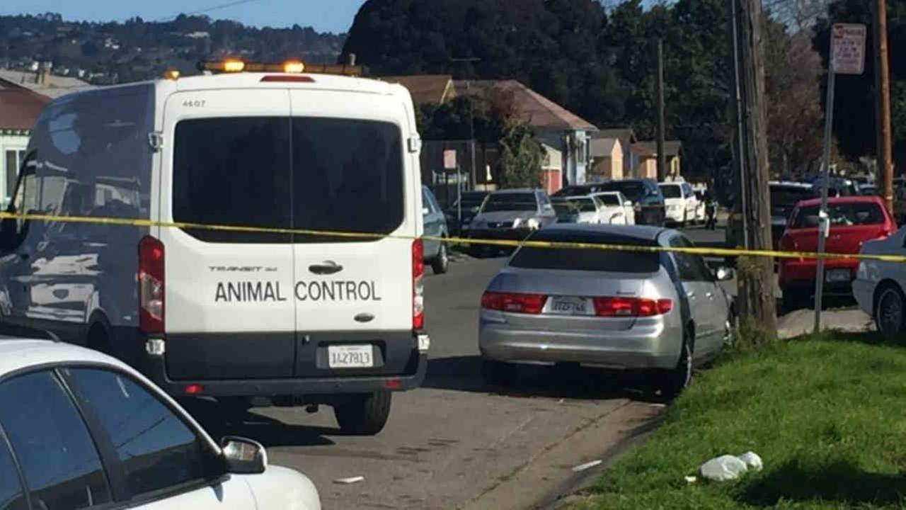 An animal control vehicle is seen after an Oakland police officer shot and killed a dog following an attack on Saturday, Feb. 3, 2018.