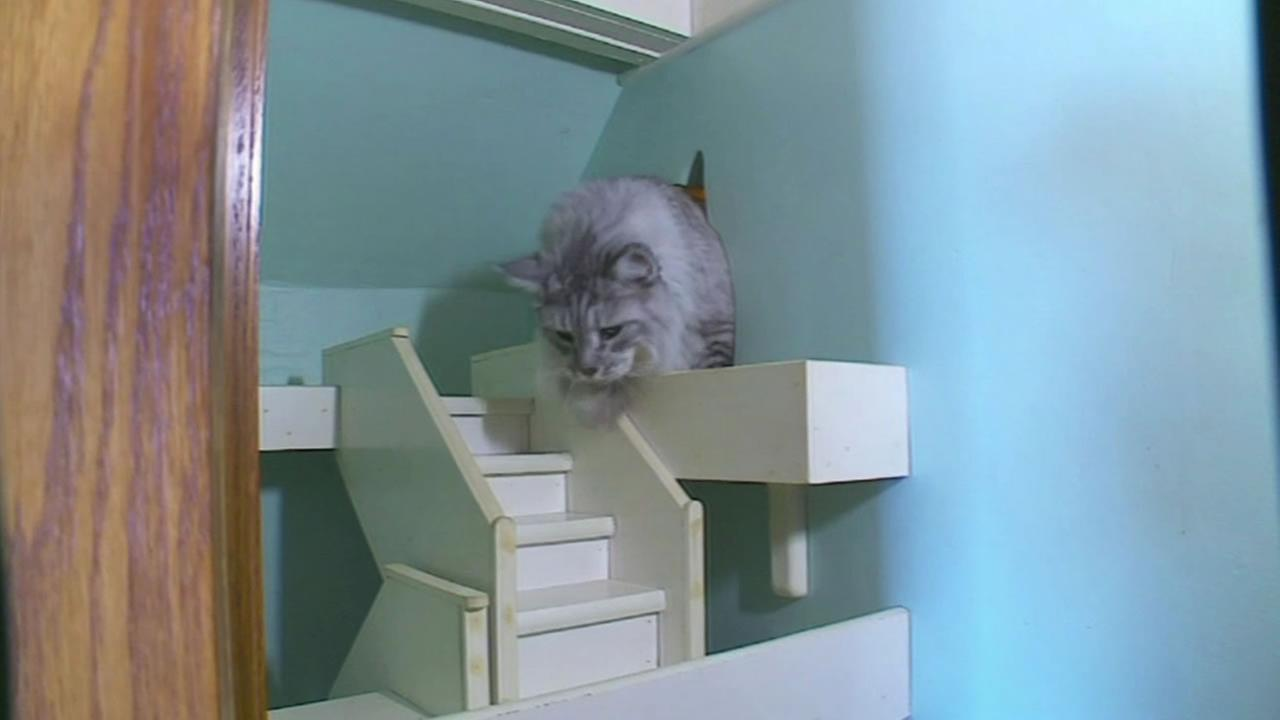 Cat enjoys the funhouse created by its owner.