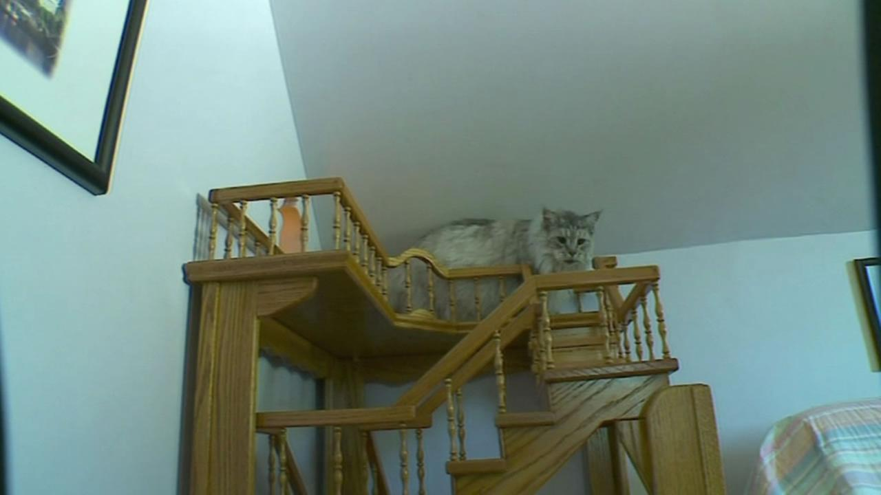 A cat plays in a funhouse created by its owner.