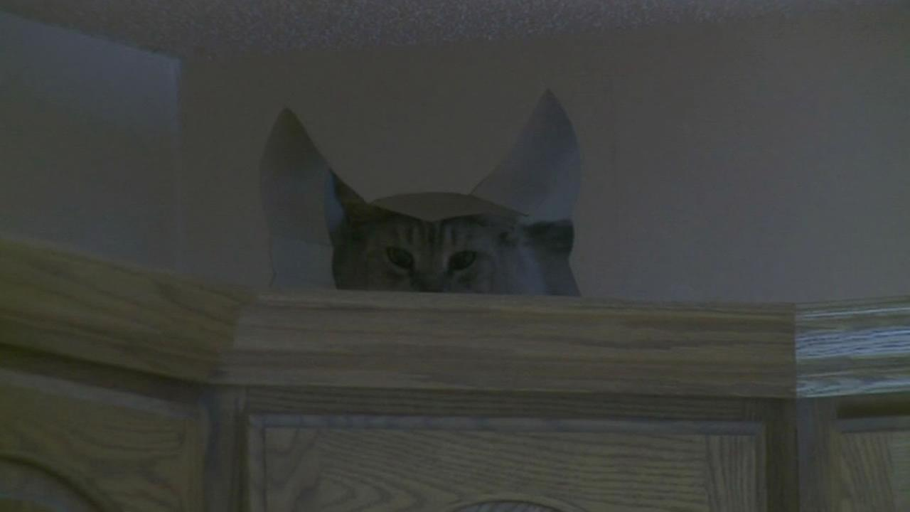 A cat plays in the funhouse its own built.