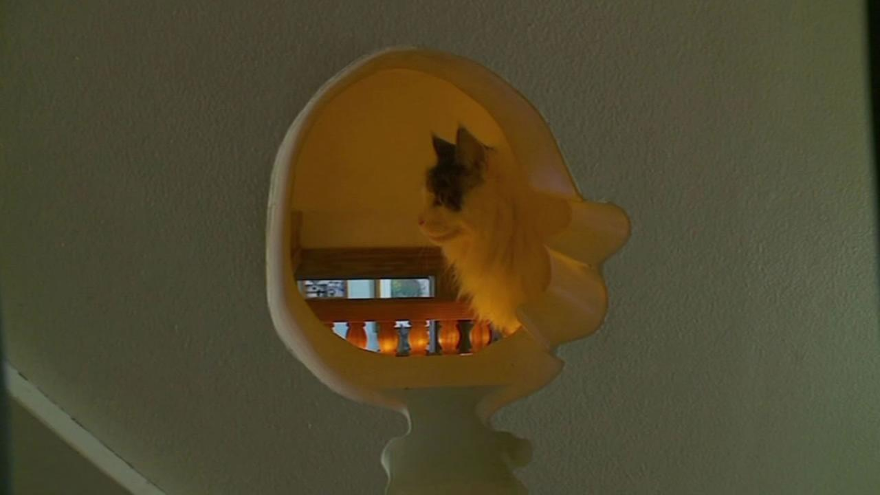 A cat enjoys the funhouse built by its owner.