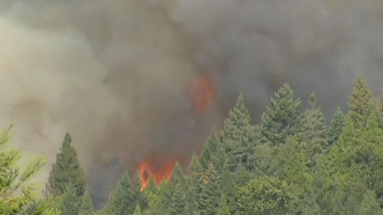 flames reach over the trees at the King Fire