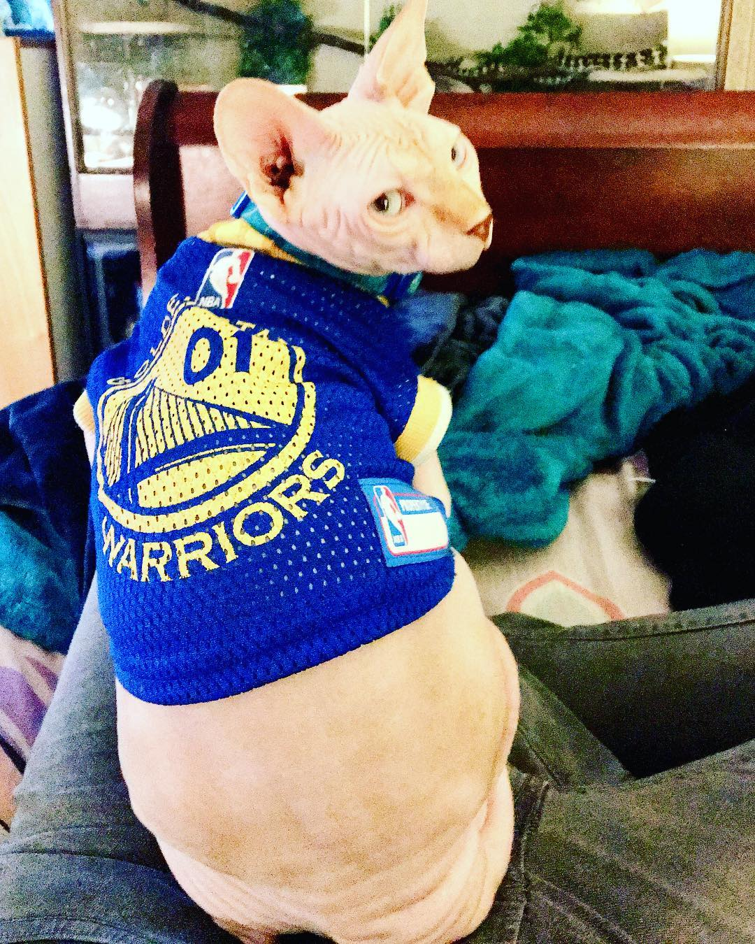 <div class='meta'><div class='origin-logo' data-origin='none'></div><span class='caption-text' data-credit='Photo submitted to KGO-TV by dannigoneherp/Instagram'>Warriors fans show their spirit during the 2017-2018 season. Share your photos using #DubsOn7 and you may see them online or on TV!</span></div>