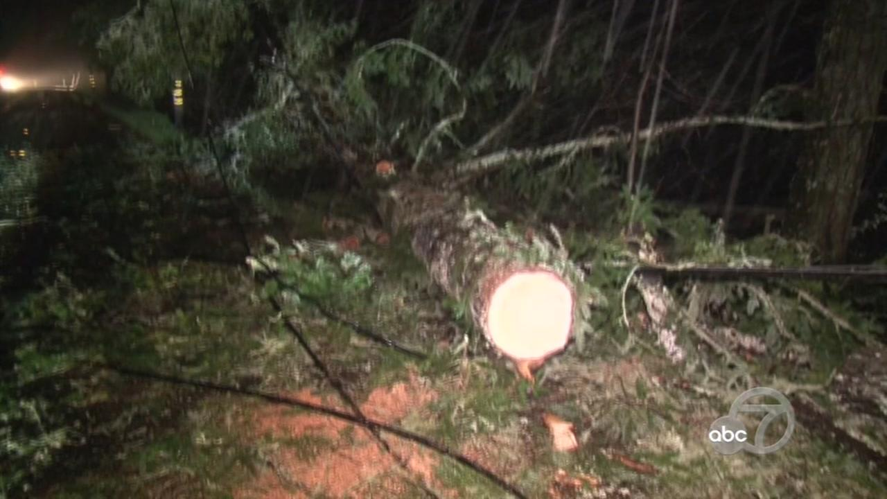 FILE -- Downed tree in Bay Area.