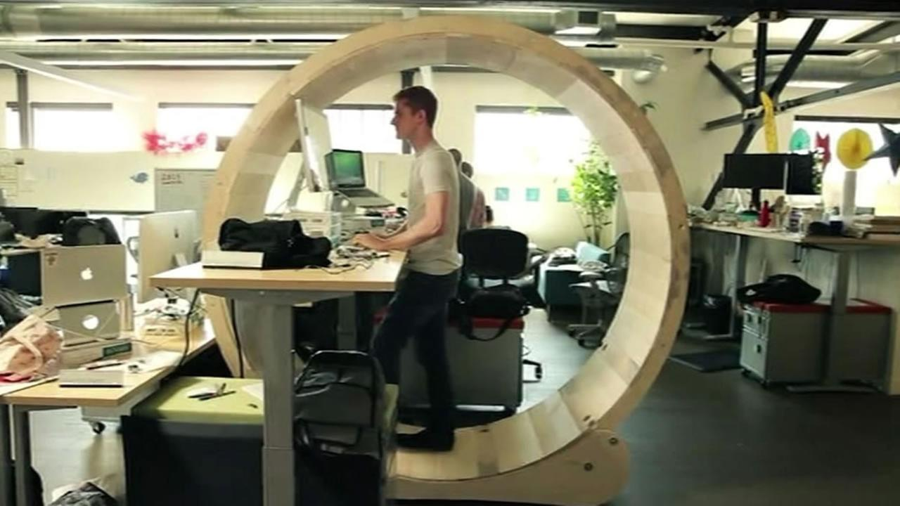 Standing desk inside a human-seized hamster wheel.