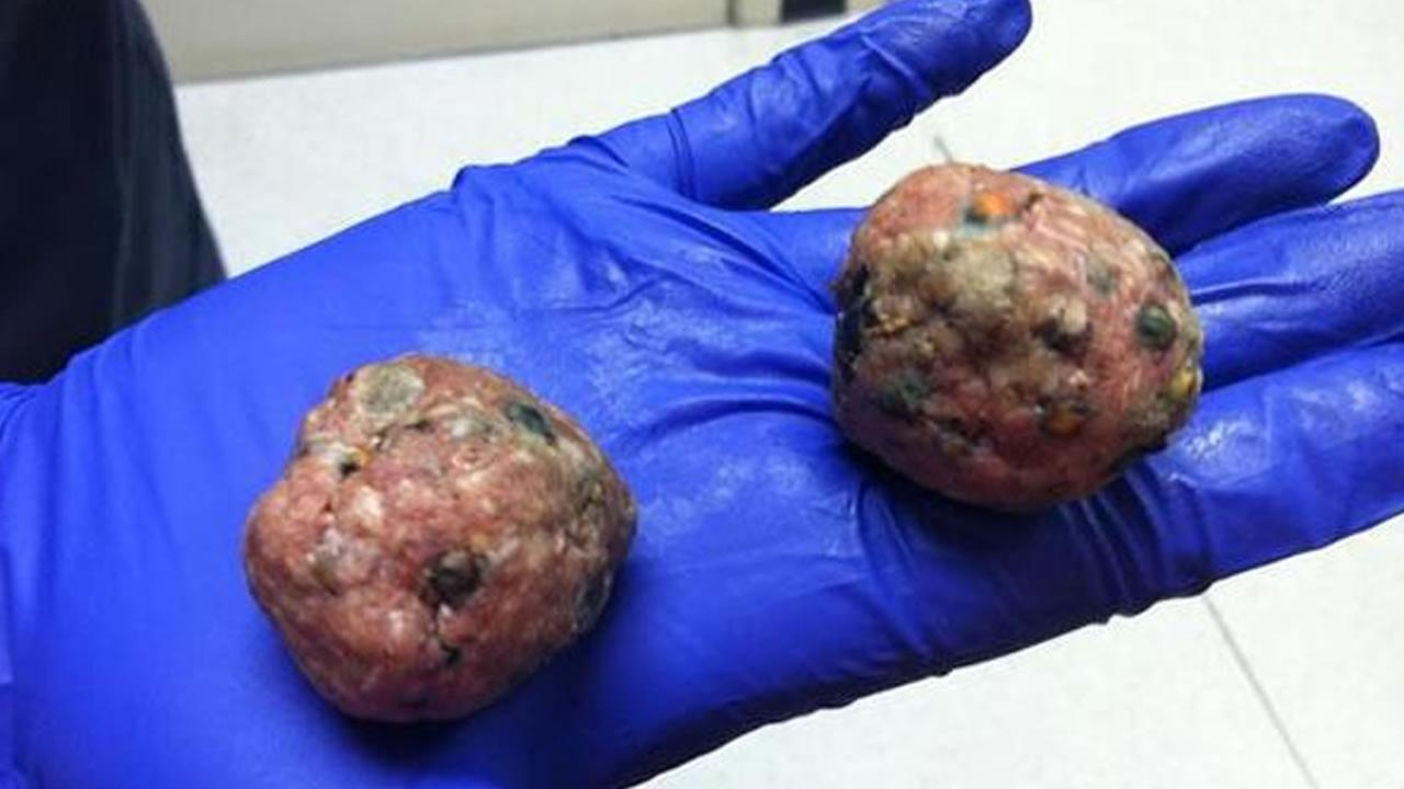 In this July 2013 photo, meatballs left in San Francisco neighborhoods that were believed to be laced with poison are shown.