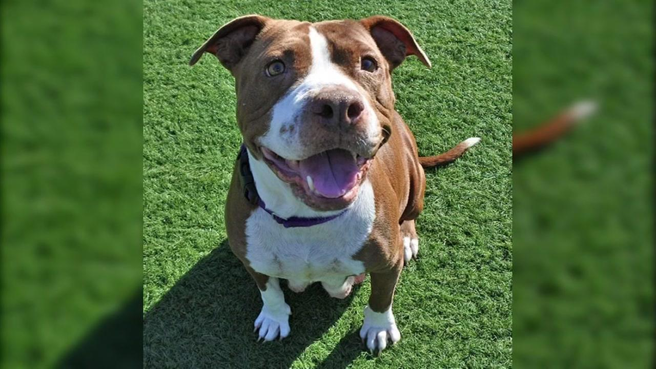 Meet this weeks Perfect Pet -- JoJo from the Humane Society Silicon Valley.