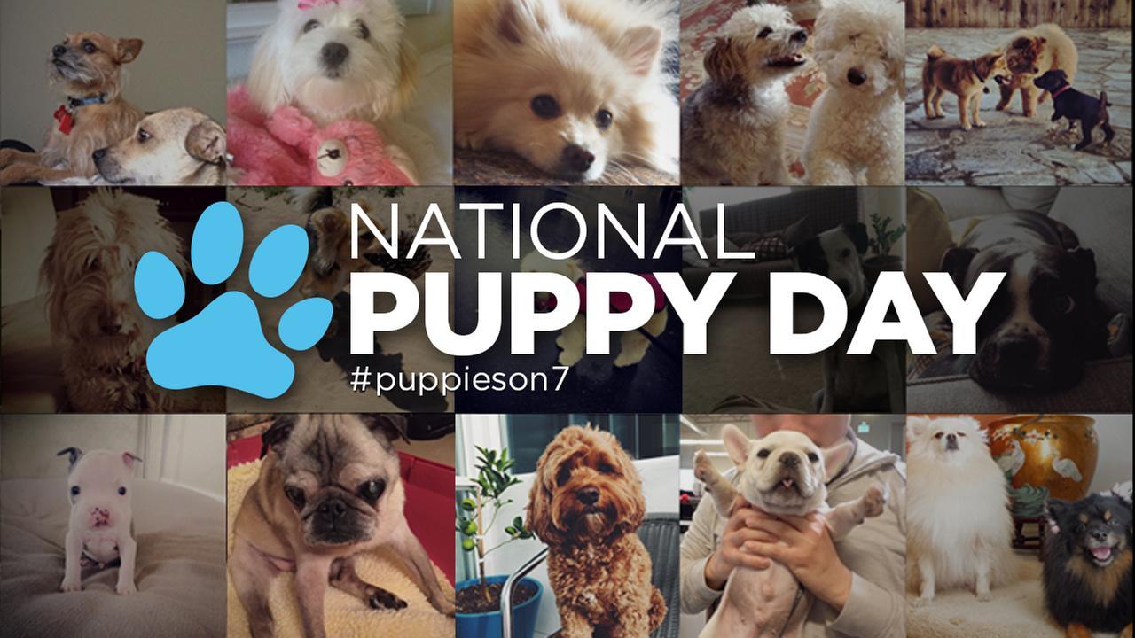 Local Dog Adoption Agencies