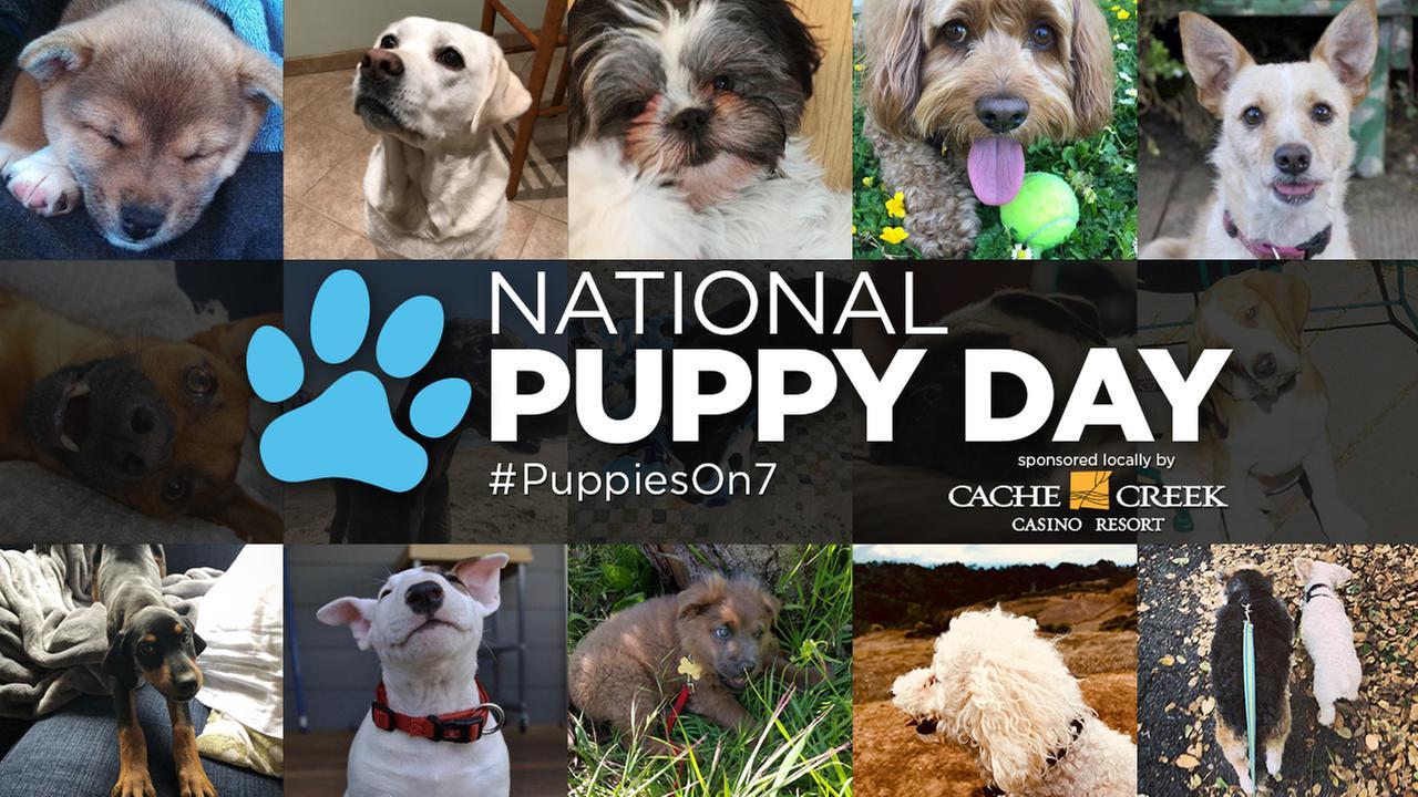 WATCH LIVE: ABC7 Puppy Cam