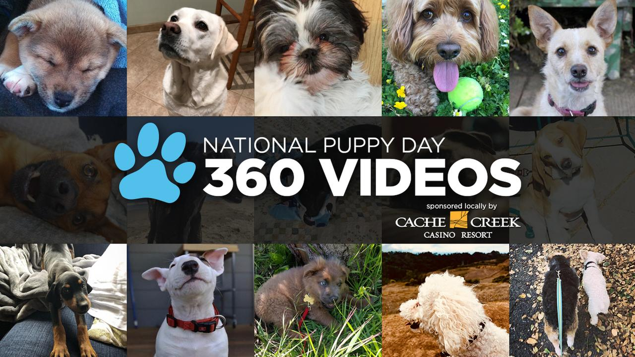 360 VIDEO: ABC7 adoption event for National Puppy Day 2018