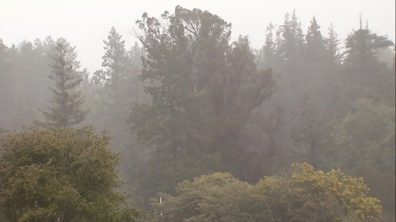 Rain falls in the Santa Cruz Mountains on Friday, April 4, 2018.