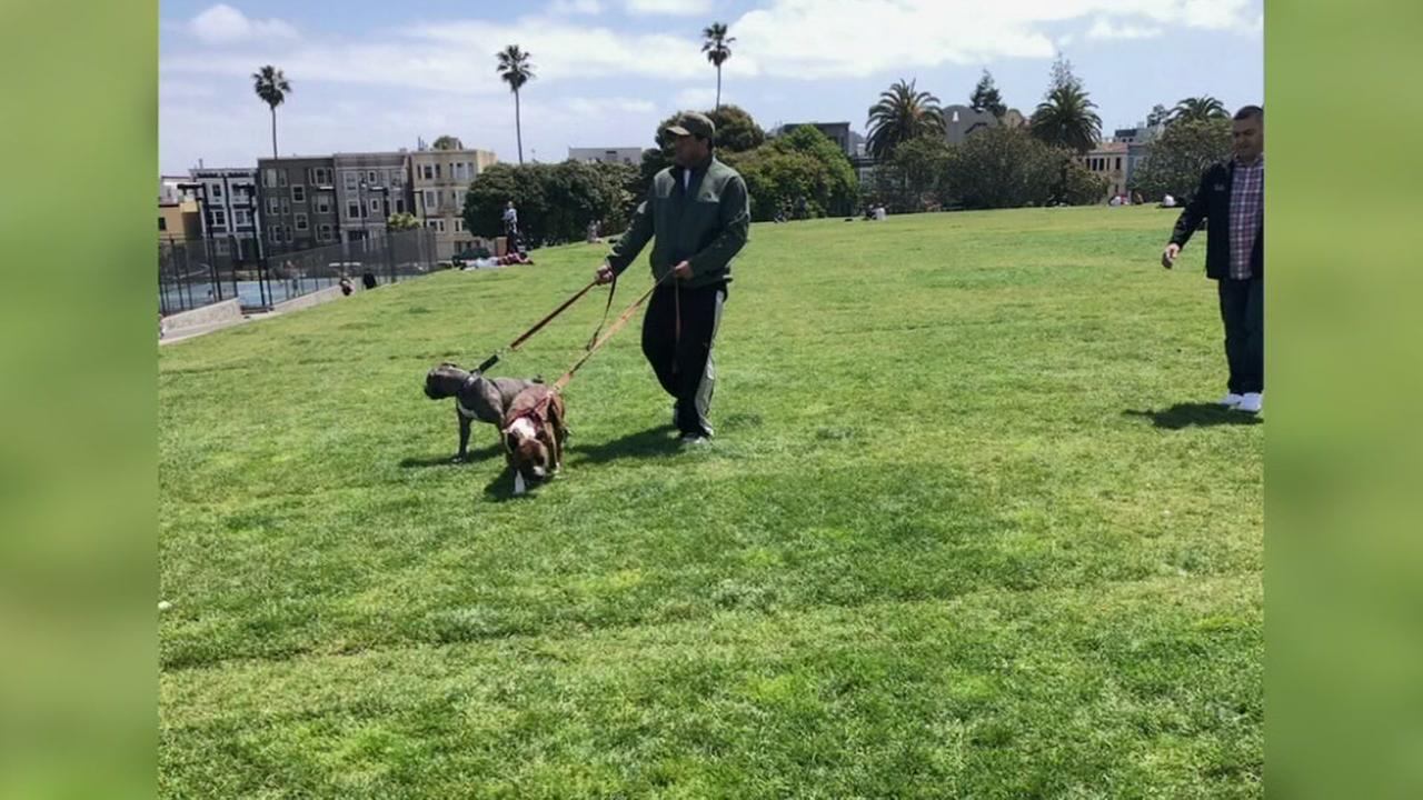 A man and two Pit Bulls appear in San Franciscos Dolores Park in this undated image.