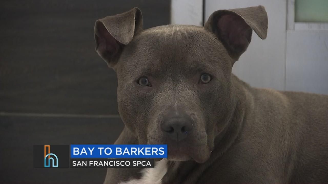 Bay to Breakers weekend is upon us and you can kick off the festivities with some furry friends.