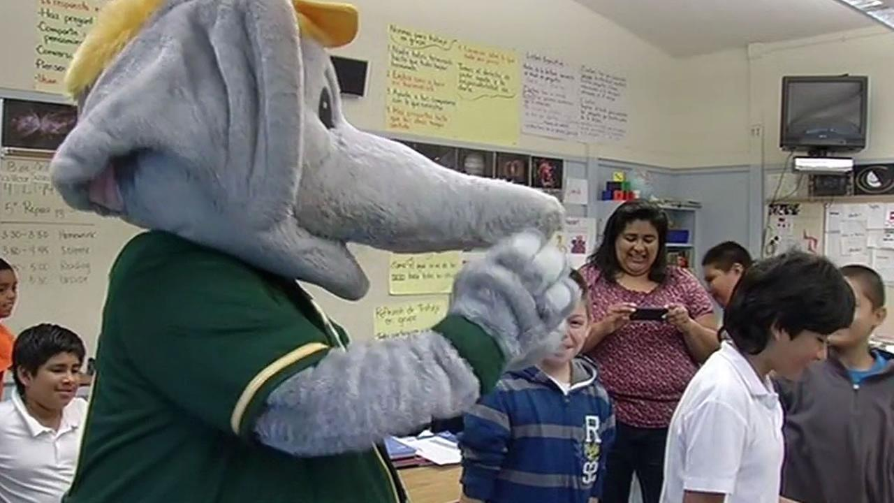 Oakland As mascot, Stomper, at an Oakland school