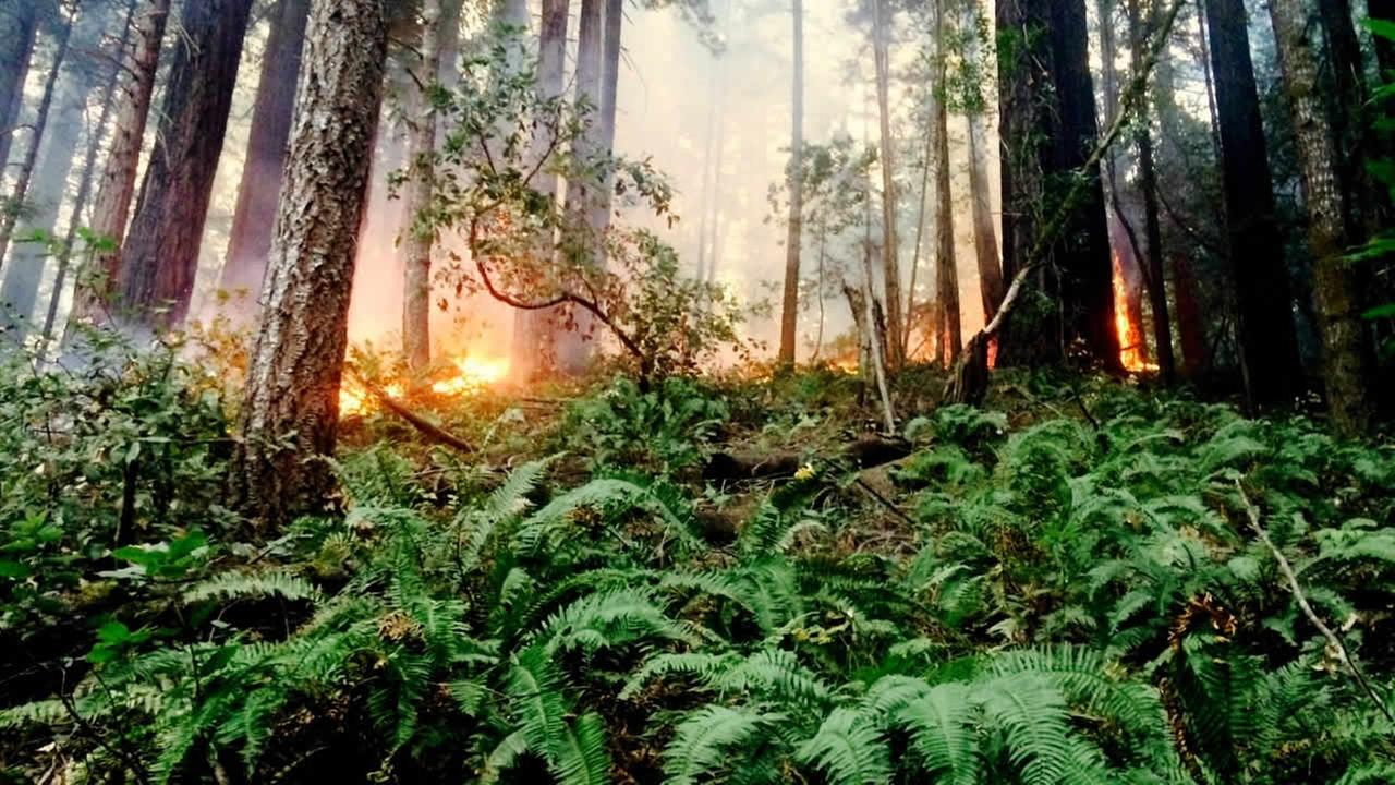 Crews battling fire that burned about four acres of one of Marin Countys largest redwood groves