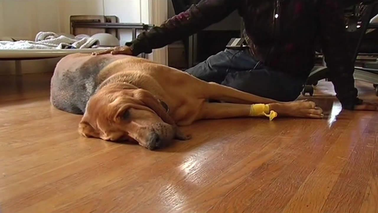 Mickey, an injured dog on the floor