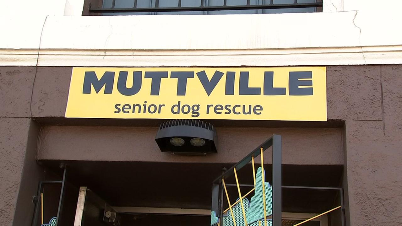 The Muttville senior dog adoption center is seen in this undated image.