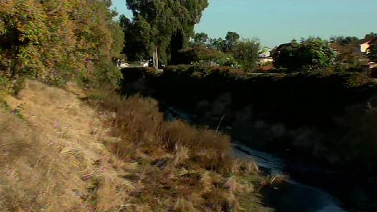 Mountain lion spotted near Old Alameda Creek.