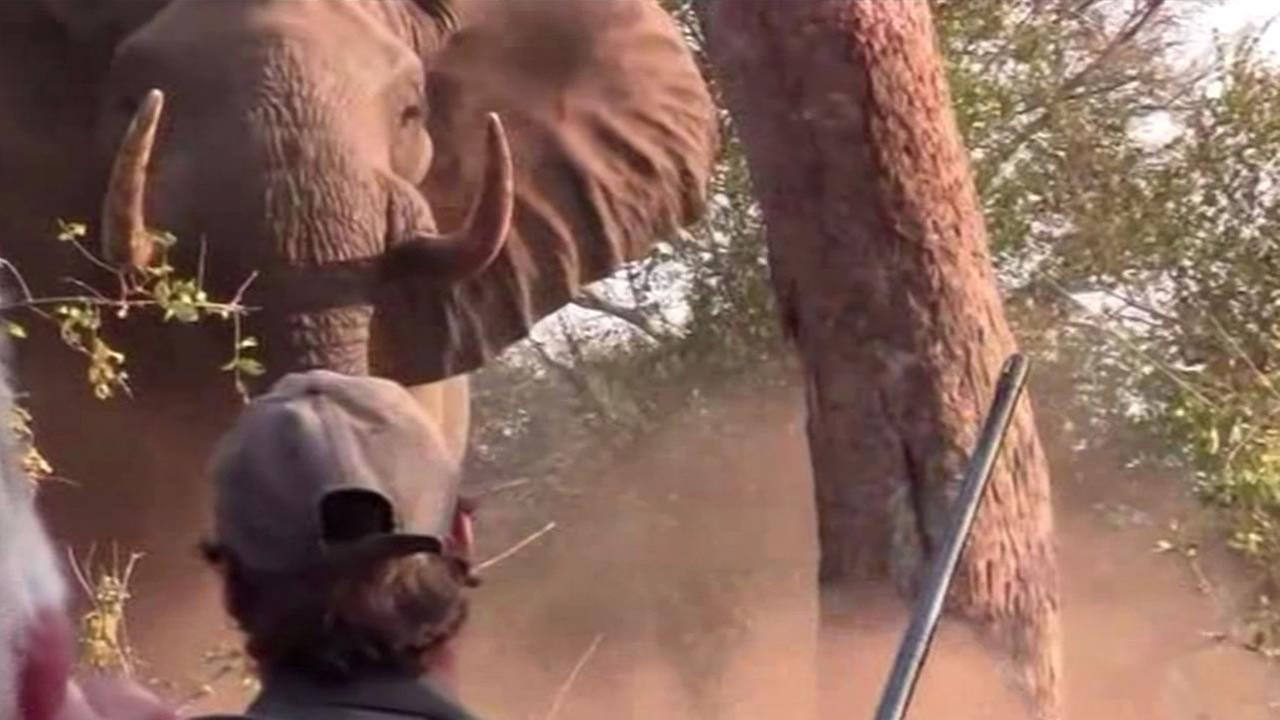 Elephant charging group