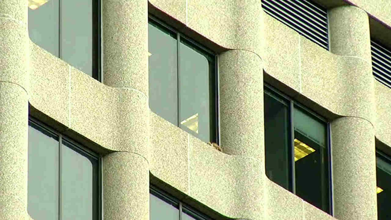 Raccoon scales high-rise in downtown St. Paul